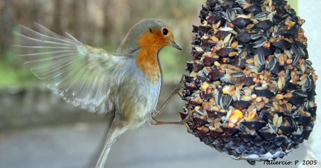 Les oiseaux for Nichoir a rouge gorge